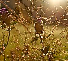 Sunset clover charm & beauty . Views (266) Thx! by © Andrzej Goszcz,M.D. Ph.D
