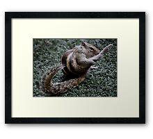 Kung Fu Squirrel Framed Print