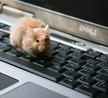 My mouse is not working ??? by Nina  Matthews Photography