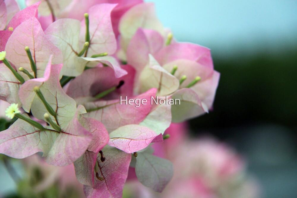 Pretty Leaves by Hege Nolan