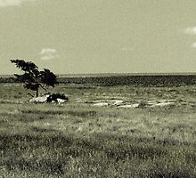 Tree on Prairie-Luverne, Mn. by hastypudding