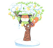 A Fat Fox In A Pear Tree Photographic Print