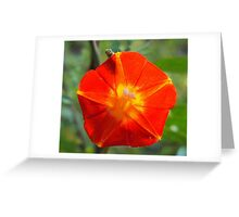 Nature Watches Greeting Card