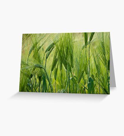 Views 5201 ♥ ♥ ♥ ♥ series . Green Green Grass Of Home. Tom Jones & Brown Sugar Story.  Greeting Card