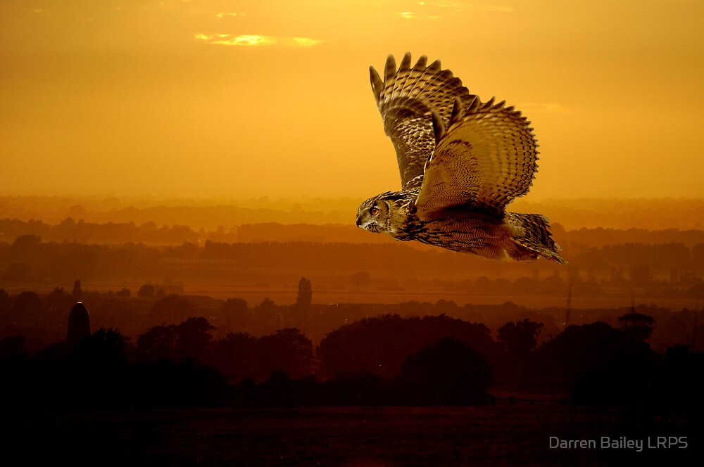 Eagle owl and the sunset by Darren Bailey LRPS