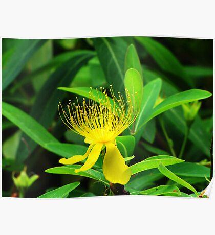 Yellow flower-Japanese Garden Poster