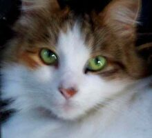 So Precious - my cat Kiti by Carol Appelbee
