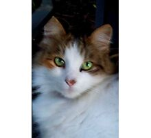 So Precious - my cat Kiti Photographic Print