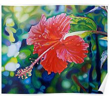 Tropical Hibiscus Poster