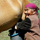 Mare Milking in Kyrgyzstan by janekeeler