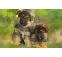 Playful Pups Photographic Print