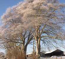 A Frosted tree near Bowness by John Brian Dawes