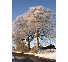 A Frosted tree near Bowness Photographic Print