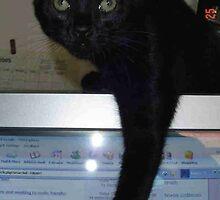 Frankie Hates Computers by katsarecool