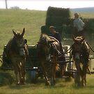 A Day on the Amish Farm by hcorrigan