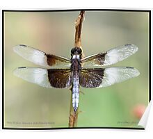 Male Widow Skimmer... Poster