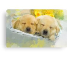 Catching a few winks Canvas Print