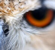 Nosey Owl - Bengal Eagle Owl by Derek McMorrine