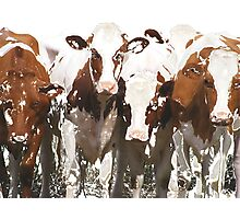 Fearsome Four Cow Group Photographic Print