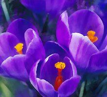 Spring Crocus by rok-e