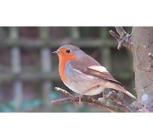 A feathered neighbour Photographic Print