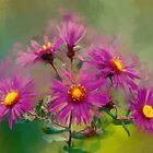 Violet Asters by rok-e