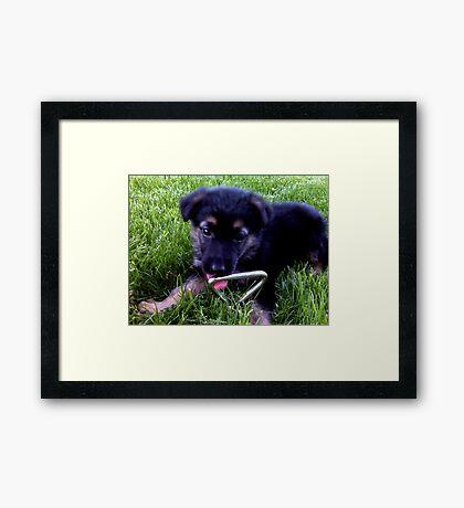 Silly Puppy Framed Print