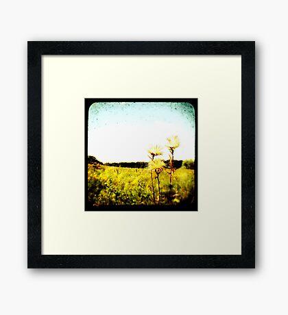 TTV Fields Framed Print