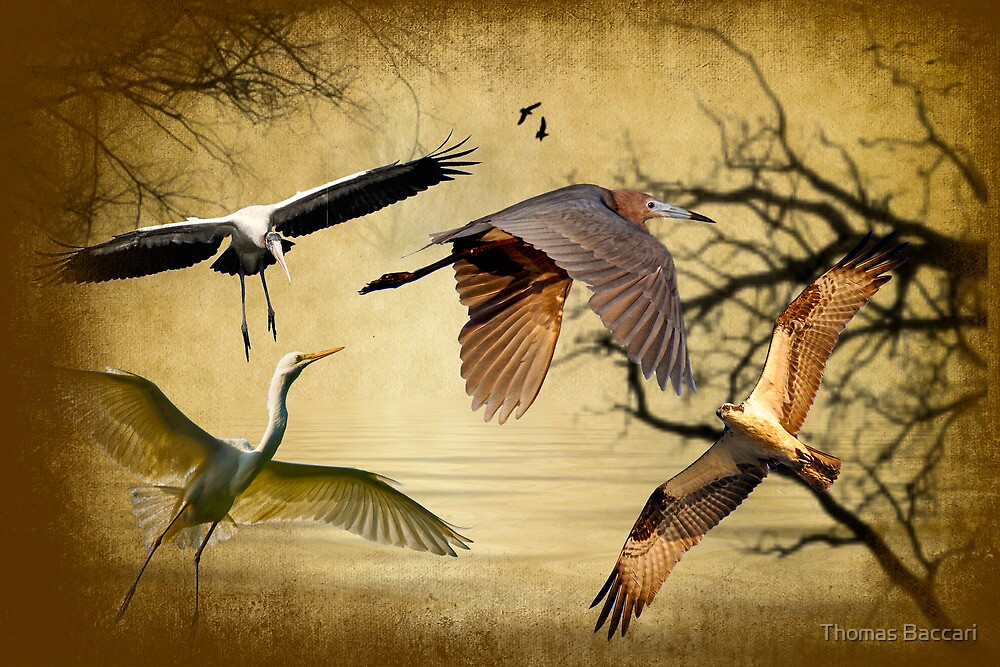 Birds In Flight by TJ Baccari Photography