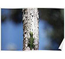 Holy Anole Poster