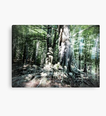 Strong Roots Canvas Print