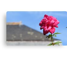 Chateau-backed rose Canvas Print