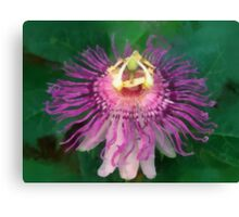 Wild Passion Flower Canvas Print