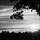 Black and White Sunrise by Susan Blevins