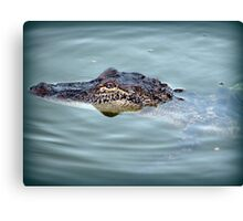 Alligator Visit Canvas Print