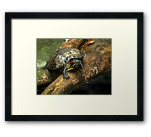 The Red-Eared Slider   Framed Print