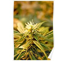Blue Dream Top Poster
