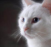 White Cat by lightmonger