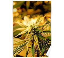 Blue Dream Flower Poster