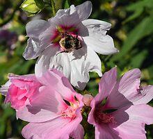 Bee on White Flower by InterestingImag