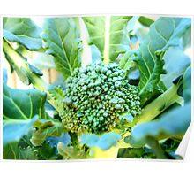 My Broccoli Garden Poster