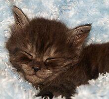 Little Grey Kitten by R. Fyfe