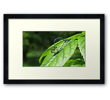 Mayfly spring Framed Print