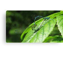 Mayfly spring Canvas Print
