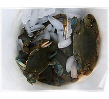Blue Crabs On Ice Poster