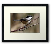 Chickadee in Autumn: A Poem in Feathers Framed Print