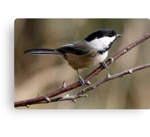 Chickadee in Autumn: A Poem in Feathers Canvas Print