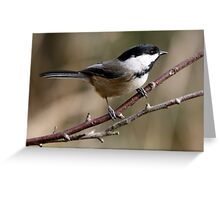 Chickadee in Autumn: A Poem in Feathers Greeting Card