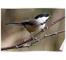 Chickadee in Autumn: A Poem in Feathers Poster