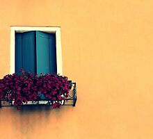 crack the shutters by Fiona Christensen